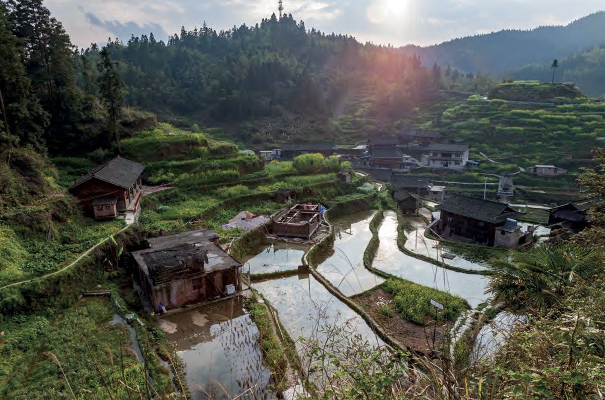 Terraced rice paddies spill down the mountainside in the Dong village of Dimen